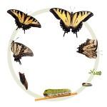 Entreprendre, produit,  analyse du cycle de vie en développement durable ou RSE, icone