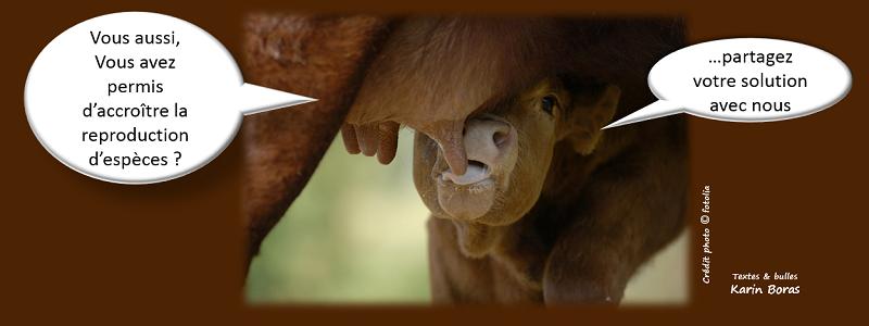 biodiversité solution 3 accroitre la reproduction d'espèces, devenir une entreprise exemple