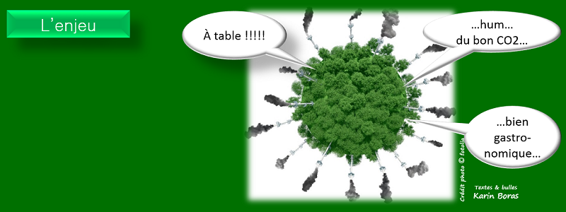 Meta Slider - HTML Overlay - 5 continents reforestaction enjeu : faire des cadeaux qui dépolluent le CO2