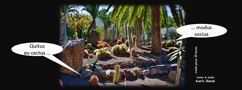 Quitus au cactus modus socius